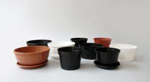 Vaza niska krizantema - Pakiranje od 50 komada