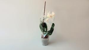 Vrećica za cvijeće - (prozirna) - 5kg
